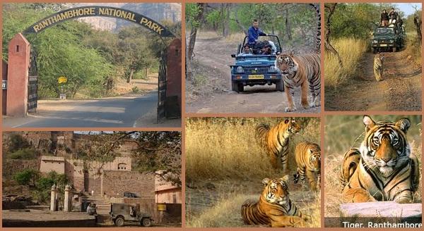 Ranthambhore National Park Safari