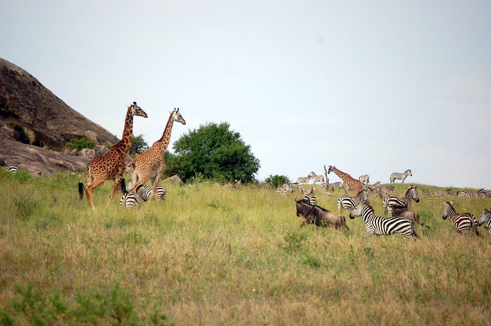 Blog Tanzania Safari